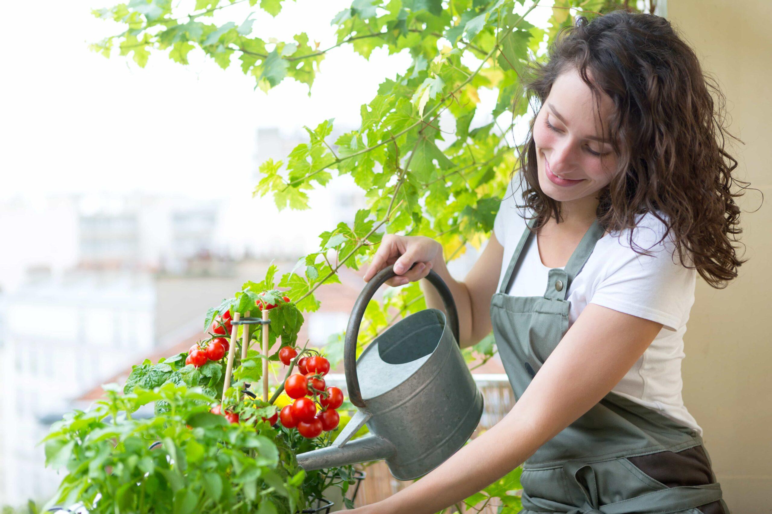 Légumes sur balcon extérieur